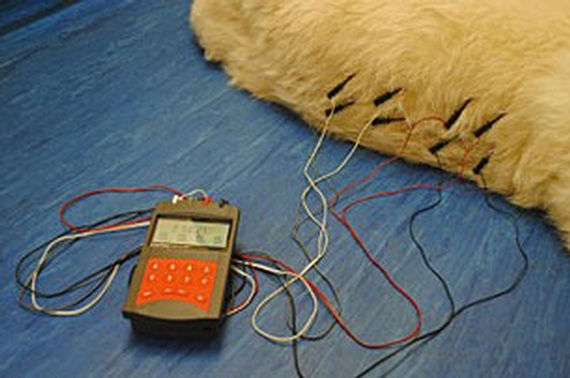 Electroacupuncture Day