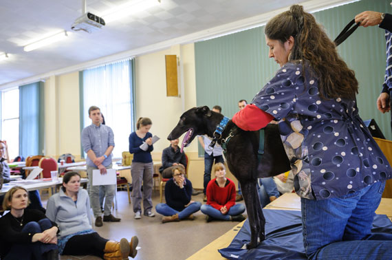 ABVA Foundation Course in Veterinary Acupuncture - Autumn